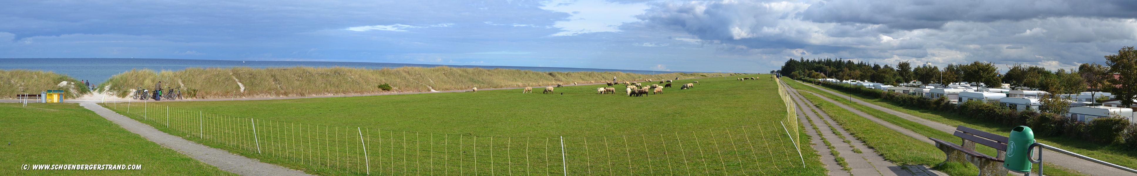 Schafe auf dem Deich in Schönberg - Kalifornien