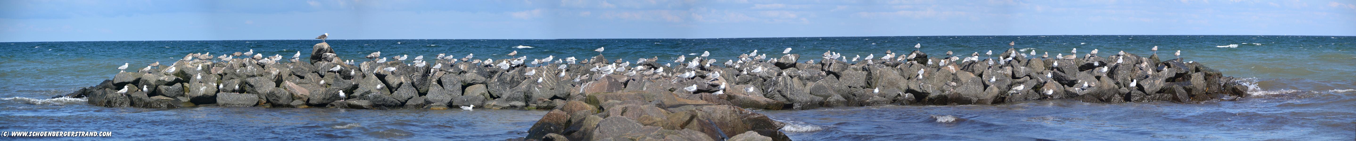 Möwen auf der Mole am Schönberger Strand